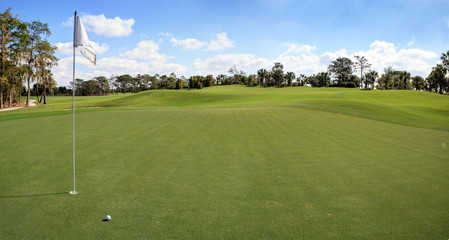 Lush green grass on a golf course
