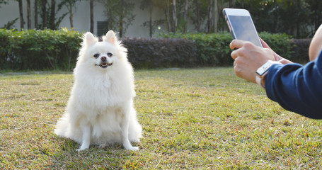 Taking photo on Pomeranian dog in city park