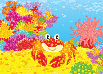 A funny red crab, a pink actinia and colorful corals on a tropical reef, a vector illustration in cartoon style