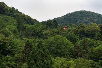 Pagoda of the Kiyomizu-dera temple hiding behind the green leafs on the hills around Kyoto, Japan