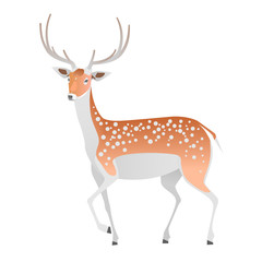Elegant deer on a white background. Vector isolated animal.