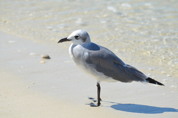 Gull Standing on the Ocean's Edge in Florida