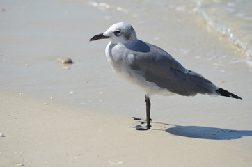Gorgeous Look at a Seagull Standing on a Sand Beach