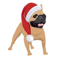 French Bulldog with Christmas hat isolated on white background. Purebred dog panting and wearing Santa hat.