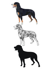 Swiss mountain dog in three different styles isolated on white background. Purebred dog silhouette and outline sketch. Purebred black tricolor dog panting.