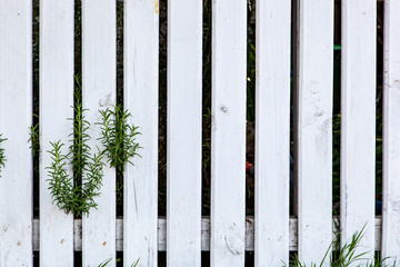 White wood texture background fence