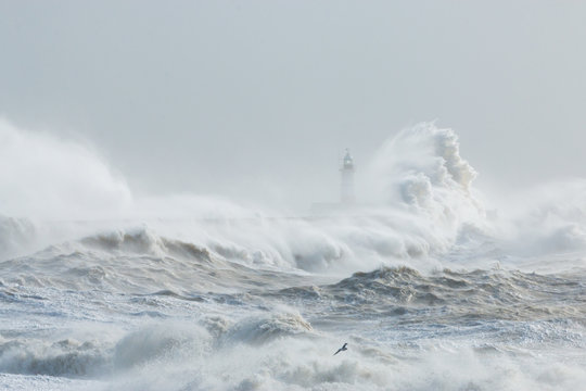 Newhaven, Sussex, Stormy Seas With Wave Crashing against Sea Wall.  Lighthouse Partially Visible Behind.  Seagull Flying Through Spray.