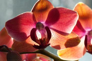 Luce artificiale per orchidee di quanta luce hanno bisogno le