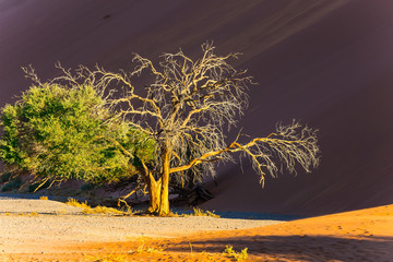Lonely little tree in the desert