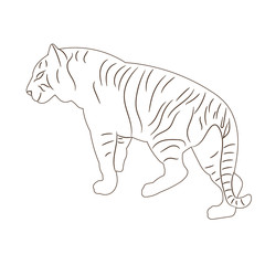 vector isolated sketch of a tiger, standing, alone