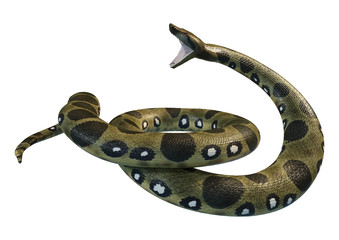 3D Rendering Green Anaconda on White