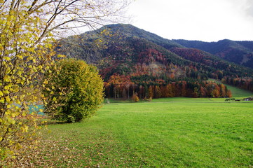 Bergwald in Herbstfarben