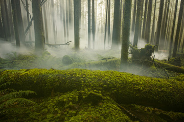 Scenic view of trees growing at North Cascades National Park during foggy weather