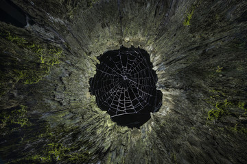 Low angle view of spider web seen through wooden cave at night