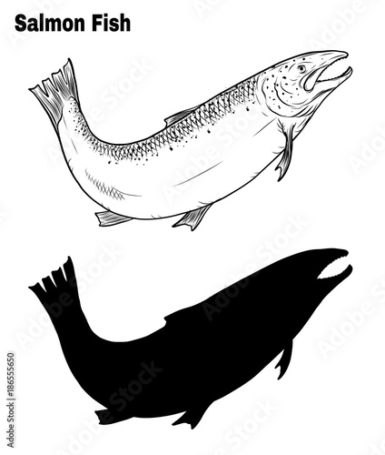 salmon art highly detailed in line art stylefish vector by hand drawingfish