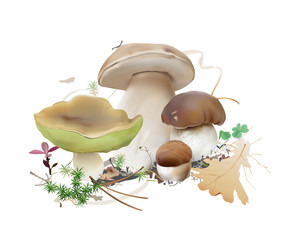 Bolete, Boletus edulis, cep, porcini.