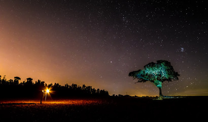 night of stars in the pasture
