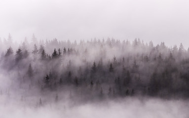 Foto auf Acrylglas Lavendel Foggy Landscape. Misty morning view in wet mountain area.