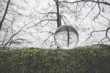Glass orb on a large branch covered with green moss