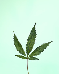 Cannabis Leaf on Mint Green Background
