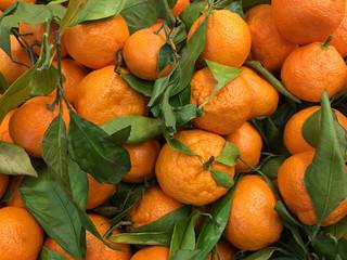 Freash harvested mandarine oranges