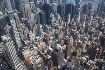 New York bird perspective