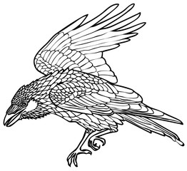 Vector illustration of walking raven black and white