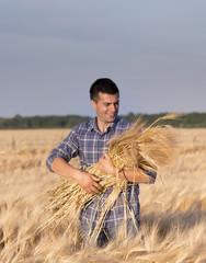 Farmer with barley stems in field
