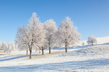 Winter scenery with trees and grass covered with hoarfrost