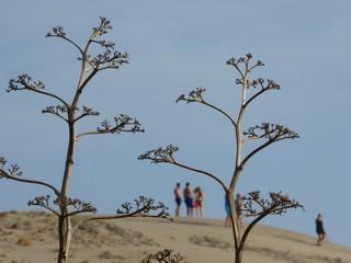 Cabo de Gata. Playa de Mónsul y los Genoveses en Almeria (Andalucia, España) se encuentra en el municipio de Níjar en la localidad de San José.