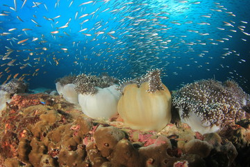 Coral reef and fish underwater