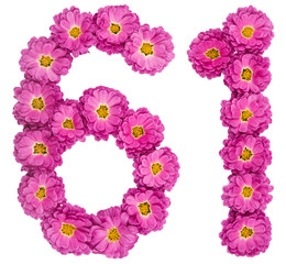 Arabic numeral 61, sixty one, from flowers of chrysanthemum, isolated on white background