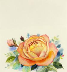 Watercolor painting original realistic orange color flower of rose