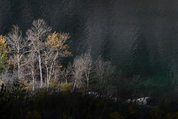 Aspens at sunrise from a trail above Lake Sabrina, Inyo National Forest, Sierra Nevada Range, California