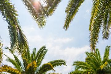 Palm trees against the sky, a sunny day on the beach