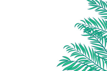 Green palm tree leaves isolated on white background with space for text.