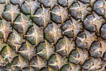 Textura exterior piña madura, fruta. Ananas comosus.