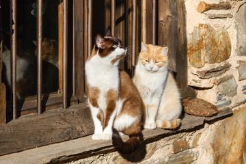 Gatos comunes tomando el sol en el exterior de la ventana de una casa.