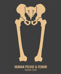 Human hip bones
