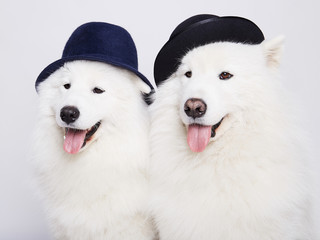 funny couple of dogs in hats. doggy. family
