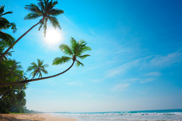 Tropical beach. Coconut palm trees on empty island resort beach.