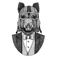 Aper, boar, hog, wild boar, aper. Animal wearing jacket with bow-tie and biker helmet or aviatior helmet. Elegant biker, motorcycle rider. Image for tattoo, t-shirt, emblem, badge, logo, patches