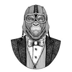 Gorilla, monkey, ape. Animal wearing jacket with bow-tie and biker helmet or aviatior helmet. Elegant biker, motorcycle rider, aviator. Image for tattoo, t-shirt, emblem, badge, logo, patch
