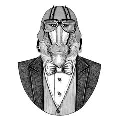Monkey, baboon, dog-ape, ape Animal wearing jacket with bow-tie and biker helmet or aviatior helmet. Elegant biker, motorcycle rider, aviator. Image for tattoo, t-shirt, emblem, badge, logo, patch