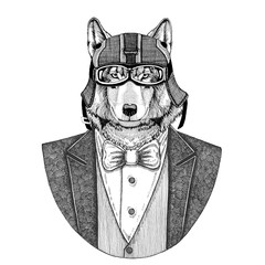Wolf, wild dog Animal wearing jacket with bow-tie and biker helmet or aviatior helmet. Elegant biker, motorcycle rider, aviator. Image for tattoo, t-shirt, emblem, badge, logo, patch
