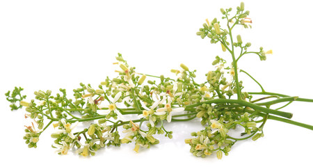 Medicinal neem flower over white background