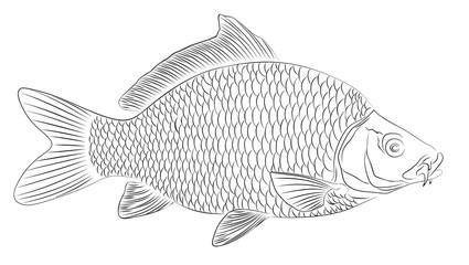 Рисунок морской рыбы