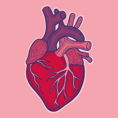 Hand drawn vector anatomic heart, colored. isolated on pink background