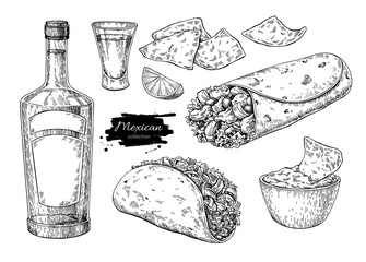 Mexican cuisines drawing. Traditional food and drink vector illu