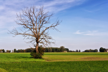Landscape with a dead lonely tree on a meadow.